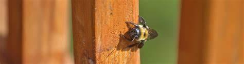 Orlando Carpenter Bee Exterminator