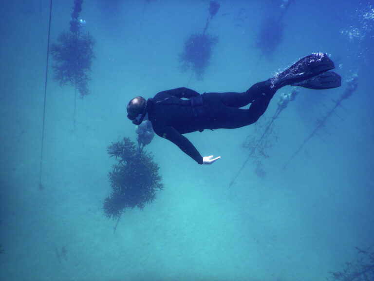 NOAA Launches $97 Million Targeted Effort to Save Florida's Coral Reefs