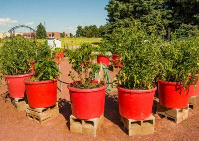 the-residency-ne-garden
