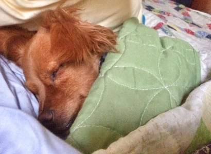 jasper sleeping tucked in