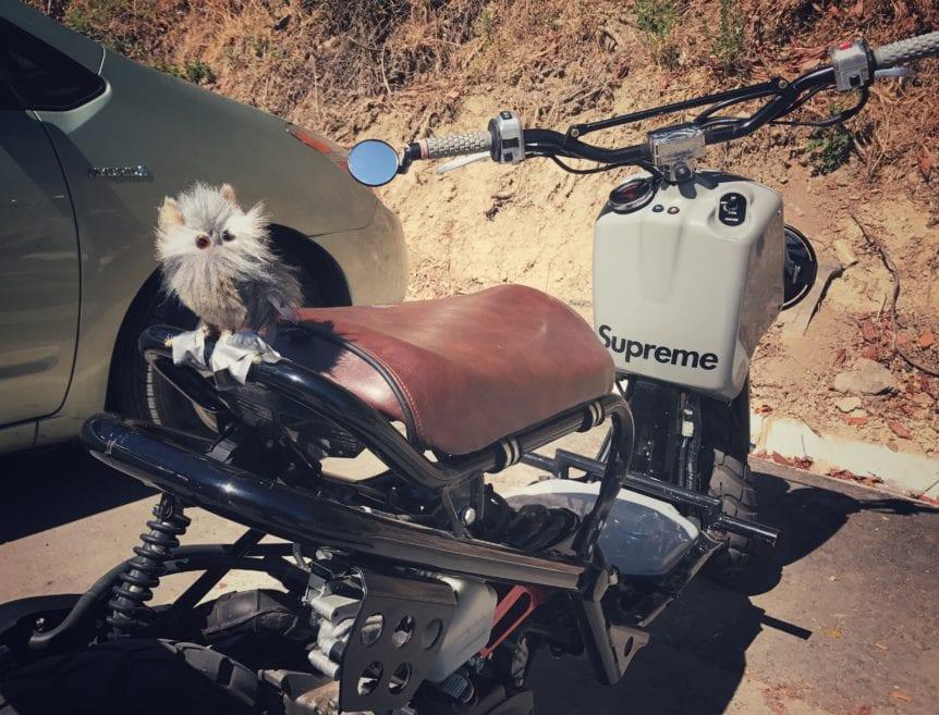 honda ruckus scooter with stuffed owl