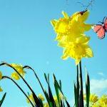 Spring Organization Tips