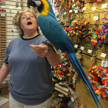 macaw parrot with mum
