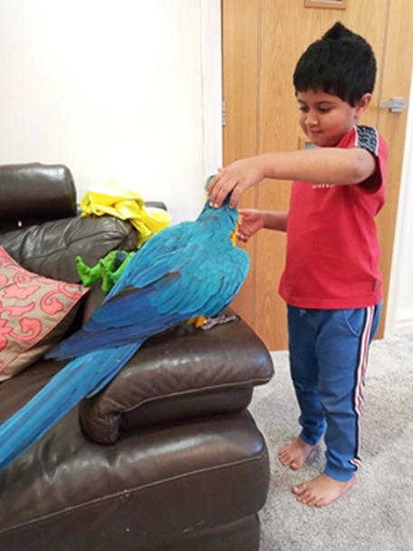 macaw parrot with kid