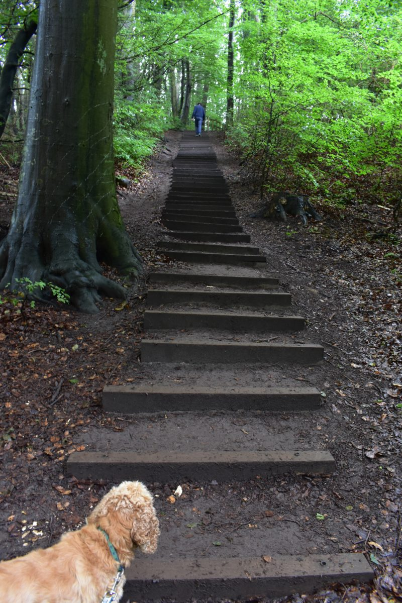 The stairs from the beach at Mons Klint