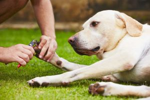 OakHarbor_Services_Pet Grooming_Cutting dogs nails