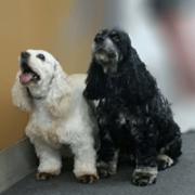 Pet Grooming_Grooming 2 dogs
