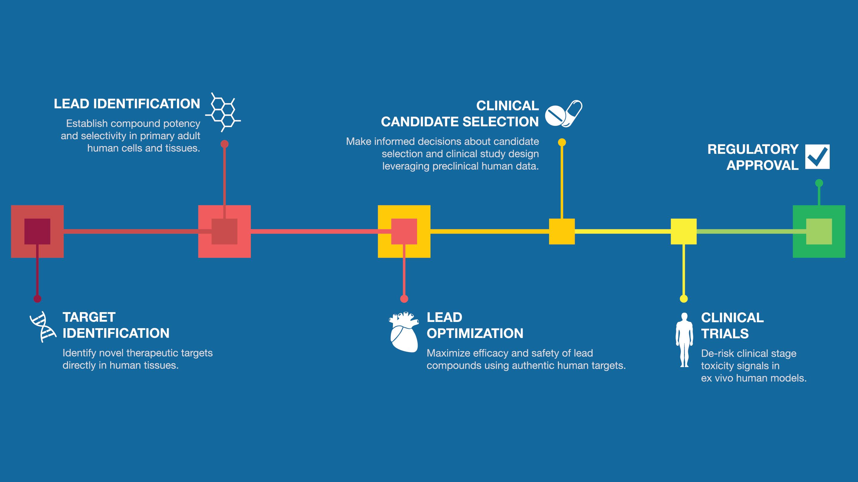 AnaBios Drug Discovery Process