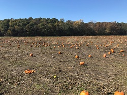 """Active Managers Selling the """"The Great Pumpkin"""""""