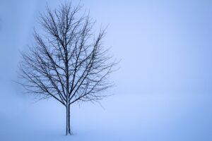 O inverno canadense