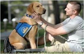 Shelter Pets - GeneralLeadership.com