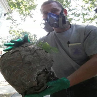 Hornets Nest being held by Terminators pest control staff member