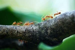 ants in Philadelphia climbing on a branch