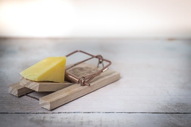 mouse trap with cheese for extermination in willingboro