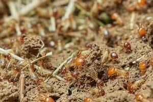 termite mound in Philadelphia
