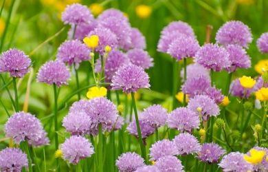 Bed of flowers in philadelphia