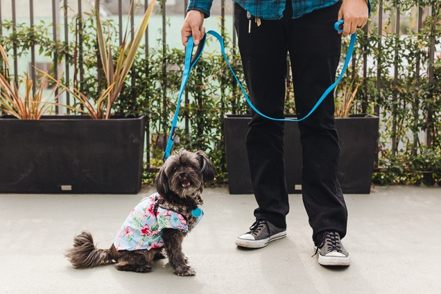 dog-leashes-lowres-3046