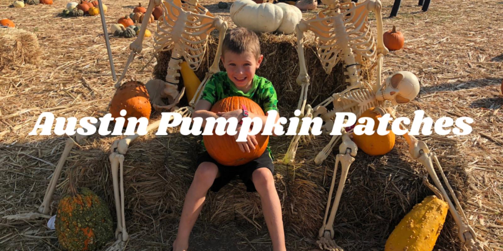 Austin Pumpkin Patches (2)