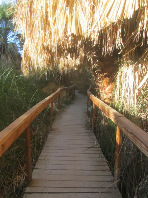 Now, it looks like we are in Disneyland approaching the tiki hut, but this path only lead us away from the palms.