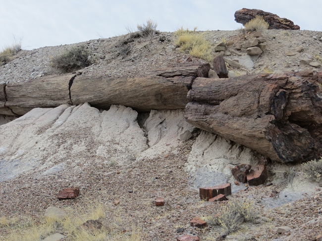 This log, is petrified, which means its wood cells were replaced with silica. Now the log is made out of rock hard glass, and has no wood in it.  Ground rules for this park. 1. do not step off the pavement at any time or get a $75.00 fine. 2. Take anything with you that you did not bring, go to jail. So keeping those rules in mind, I did not buy anything at the gift shop.