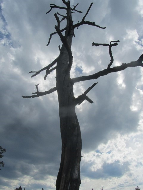 We find a cool dead tree