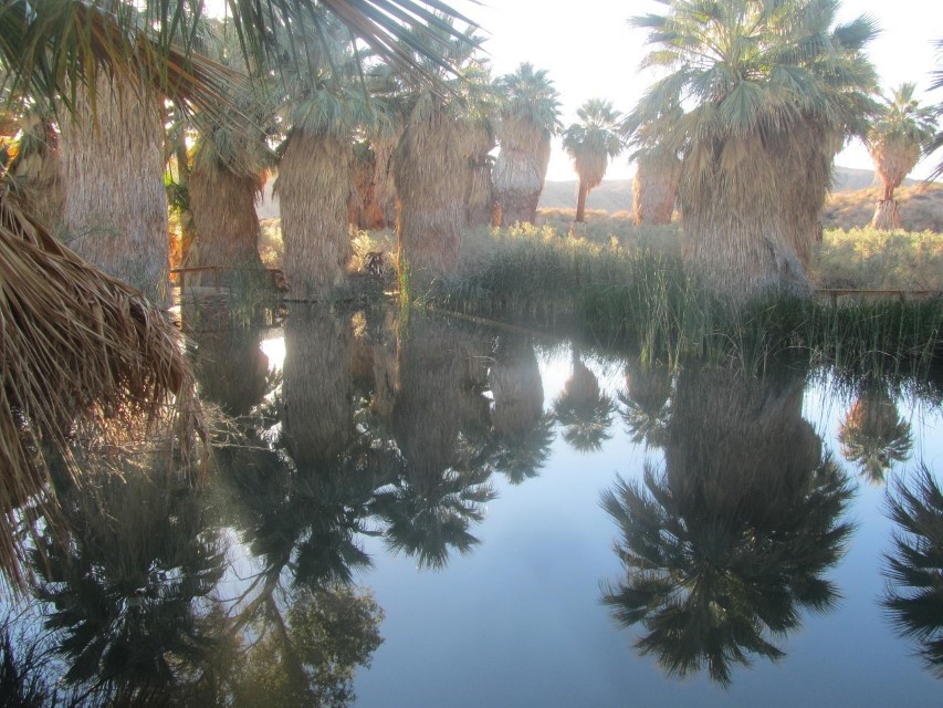 We have arrived, the water and the palms are pretty.  The water, when it dries on the edges, leaves a salt ring. We are wondering if it is salt water.