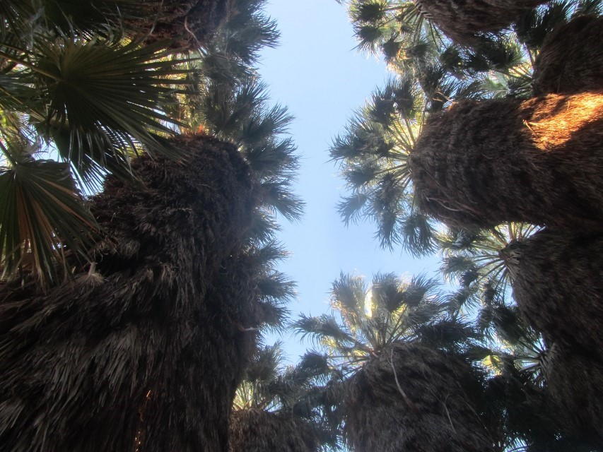 These palm trees look to be about 150′ tall, which makes us feel very short.