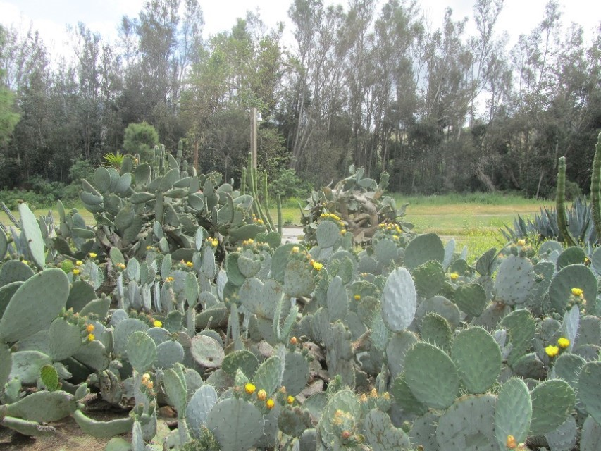 We find awesome cactus flowers, but the septic is doing a great job of making its presence known so we can't stand to stay here any longer.