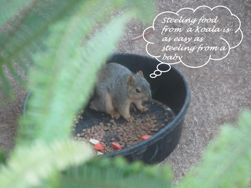 You will have to click on the image to learn from the squirrel