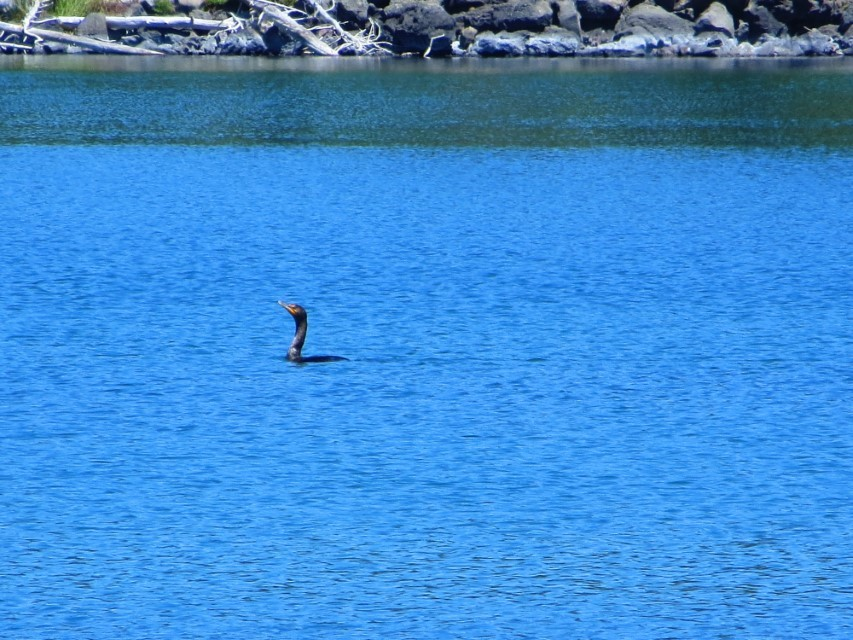 Some loon out on the lake, claims it all for him self!