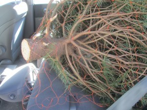 Home Depot – (They always rescue me. :)) They have about a hundred of these bad boys out in their parking lot. They were cheep too! At only $19 plus tax I have the very best  non processed chemical free deodorizer money can buy. Gyms and locker rooms should have these things!