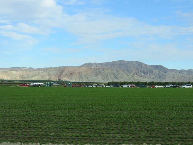 These people are harvesting Bell Peppers. Lots of manual labor about the farms.