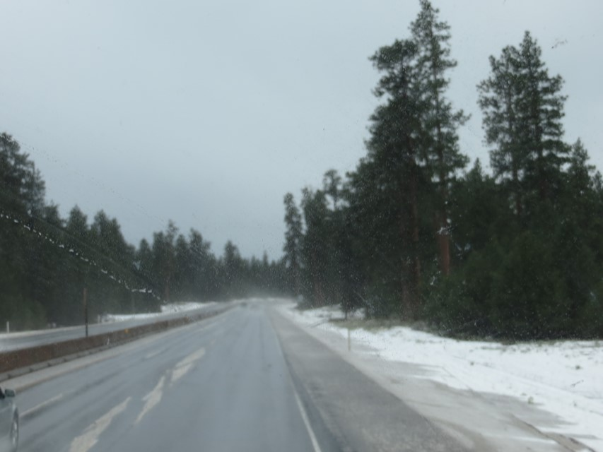 snow in pines