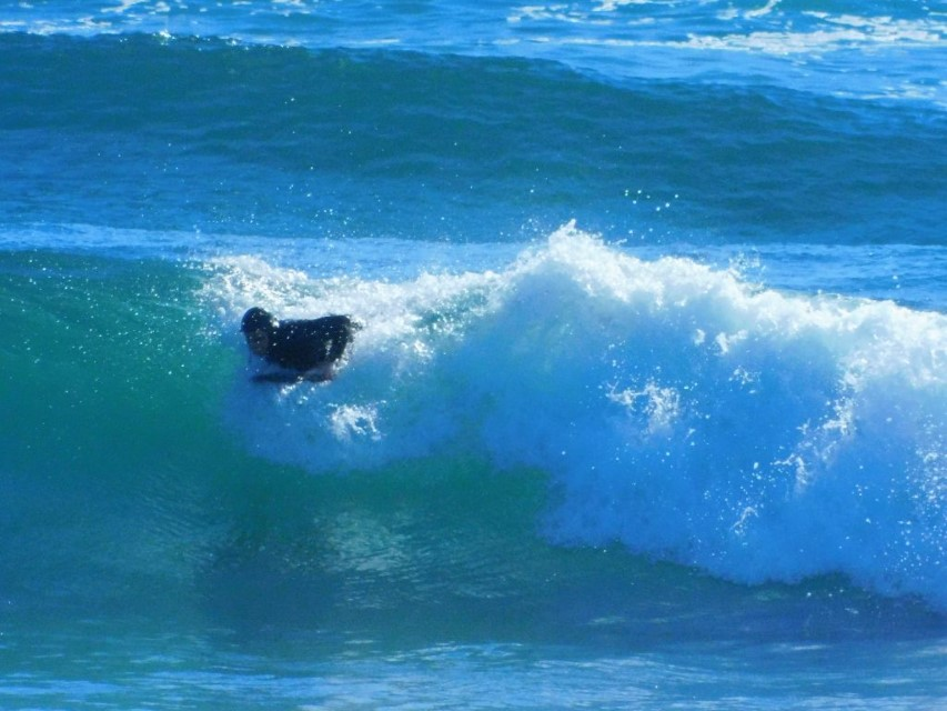 surfer getting up