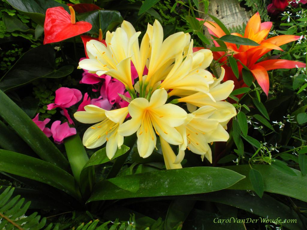 Mediterranean Flower Exhibit