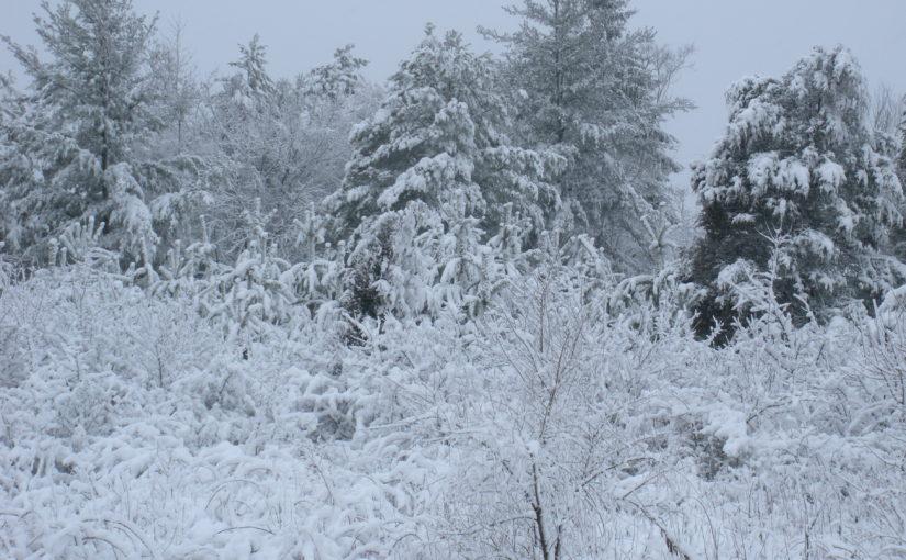 Grace in a Winter Storm
