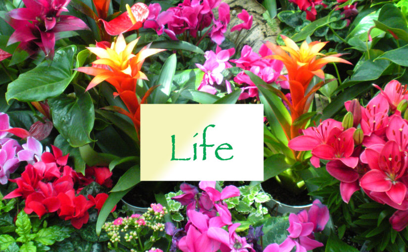 Five Ways to Support the Choice for Life
