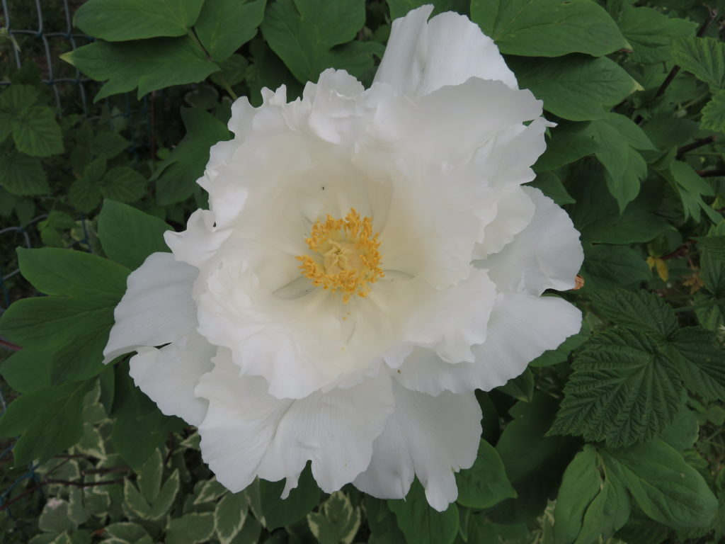 Blooms in my garden