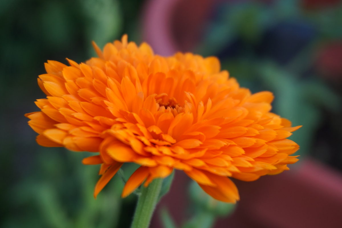Herbs in the Garden: Nourishment and Remedies