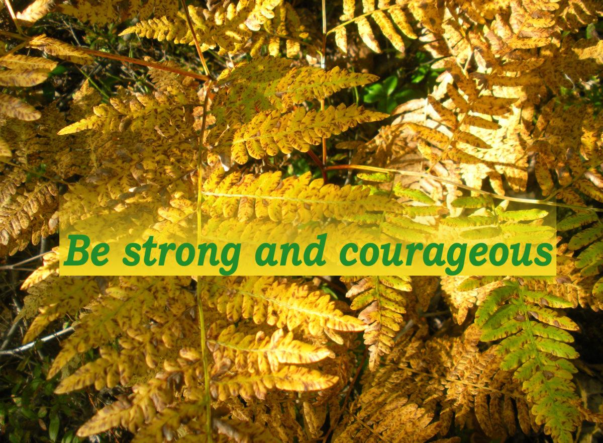 Active & Steadfast Faith