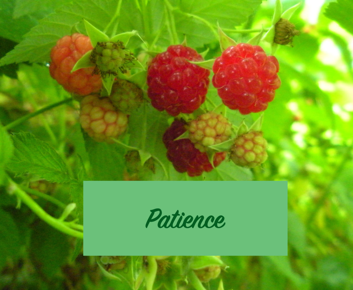 Learning and Teaching Patience