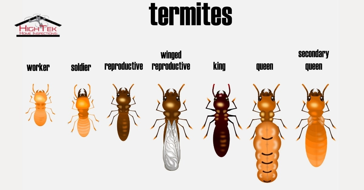 How Do I Know If My House Has Termites