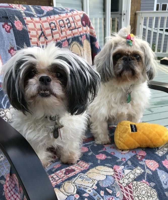 God's Love Shines Through Our Dogs by Jen Fournier