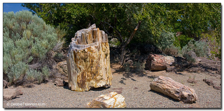 Petrified forest in Vantage, WA