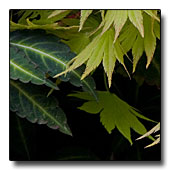 Foliage combo