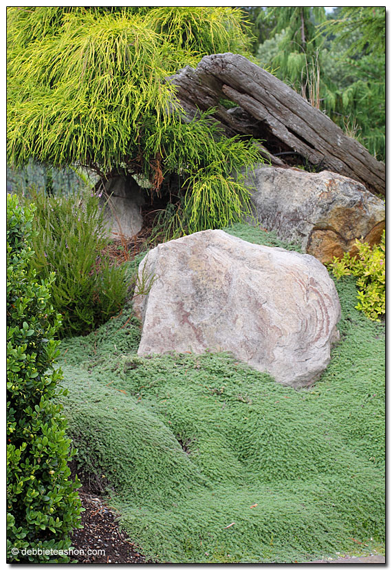 Woolly thyme (Thymus pseudolanuginosus)