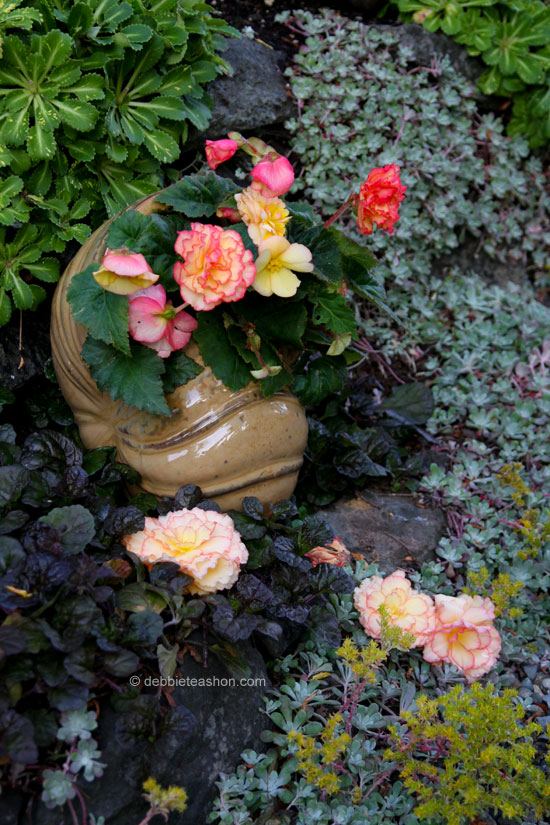 Begonia in a shell planter