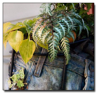 Plants in pants