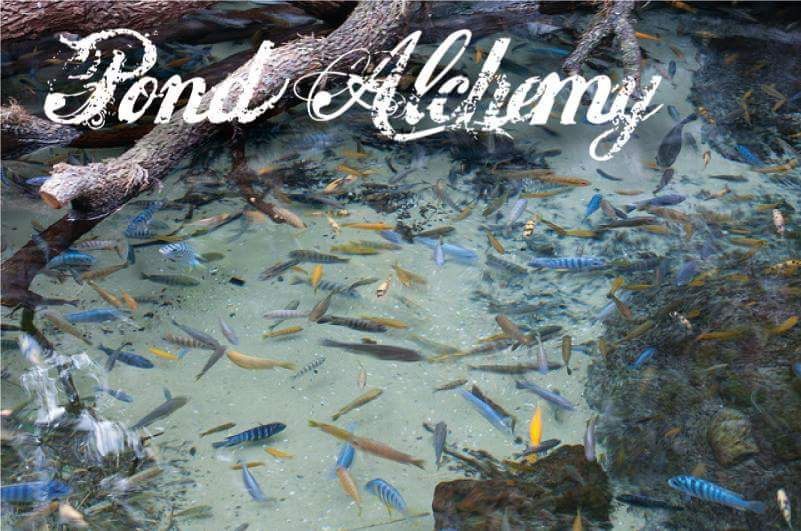 Miami Pond by Pond Alchemy