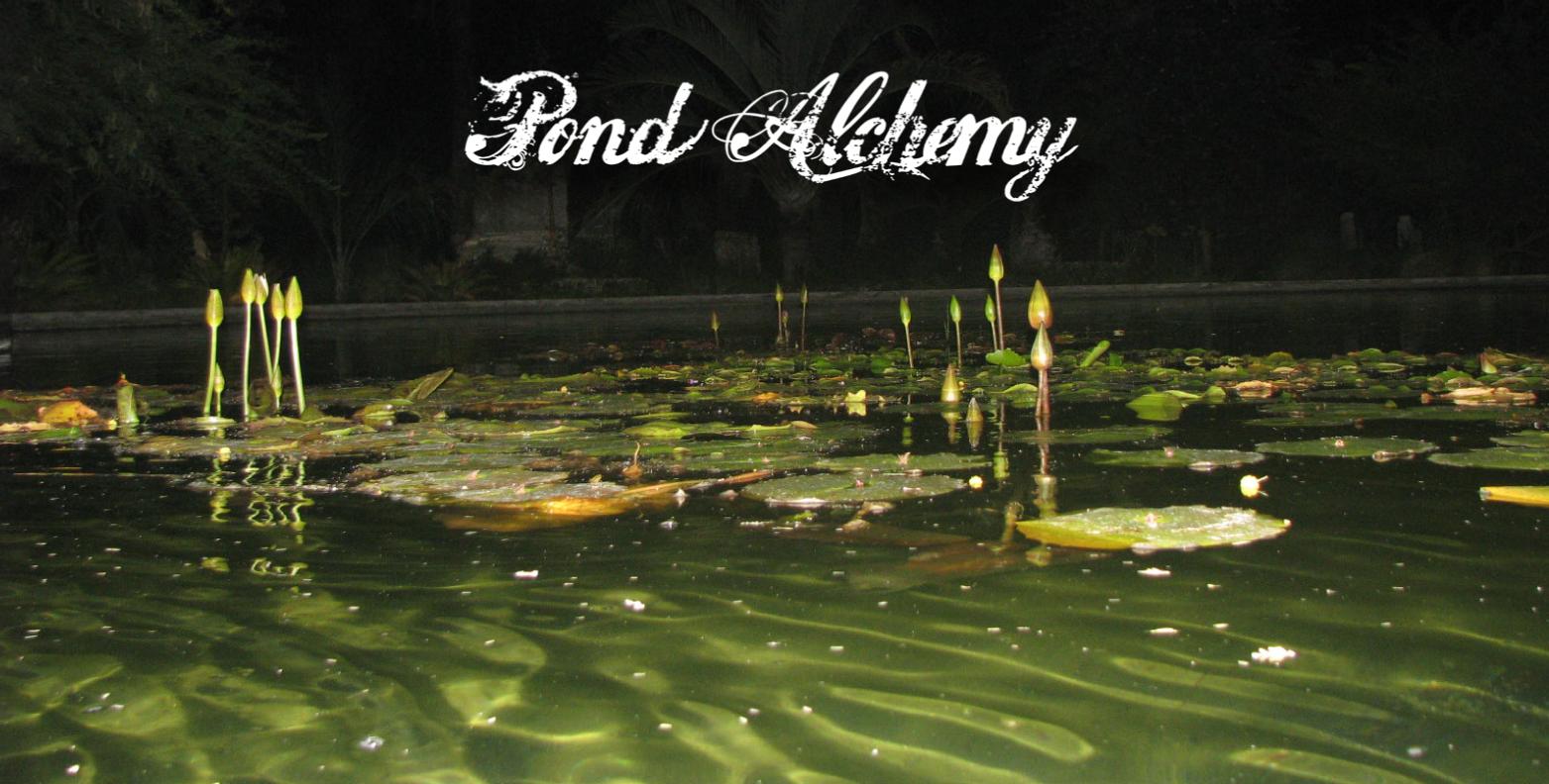 Miami Pond Construction